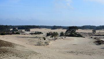 Een uitzicht over een zandverstuiving van Gerard de Zwaan