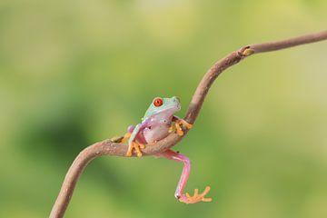 Hanging in a tree van Joyce Beukenex