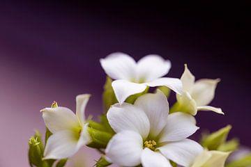 Blumen in violetter Atmosphäre von