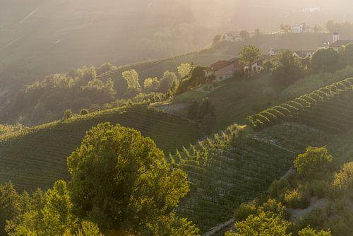 Wijngaarden in Piemonte van