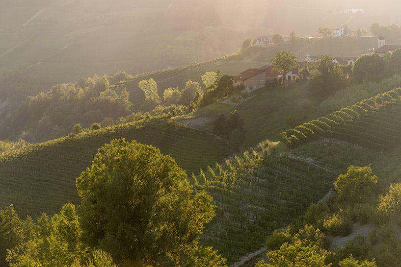 Wijngaarden in Piemonte van Sander Strijdhorst