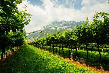 Wijngaarden in Zuid-Tirol van Leo Schindzielorz