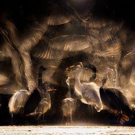 Groep reigers in een vijver gedurende de nacht. van AGAMI Photo Agency