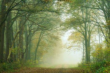 Herfstbos met laan in de mist