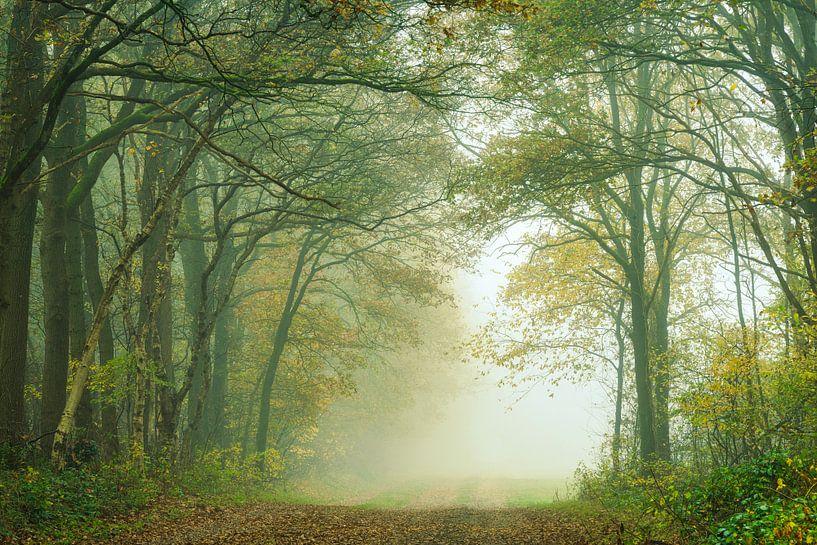 Herfstbos met laan in de mist van Peter Bolman