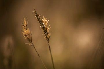 Stacheln im Wind von Hanneke Bantje