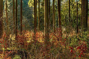 Wald 2 von Johnny Flash