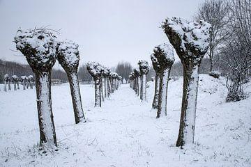Poller Weiden im Schnee von Ingrid de Vos - Boom
