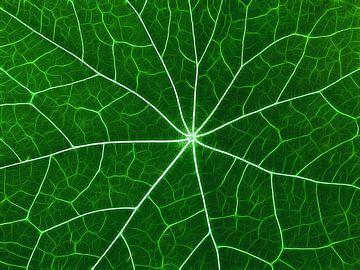 Nervöses Grün (Blattadern in Grün) von Caroline Lichthart