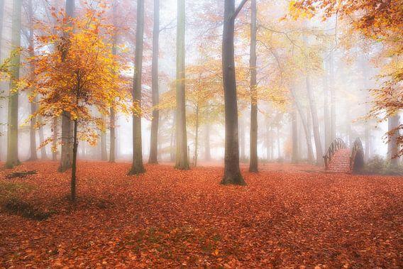 Herfst en mist in het bos