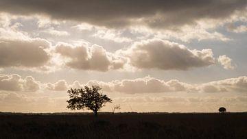 Sinister heidelandschap van Jacqueline Kroezen
