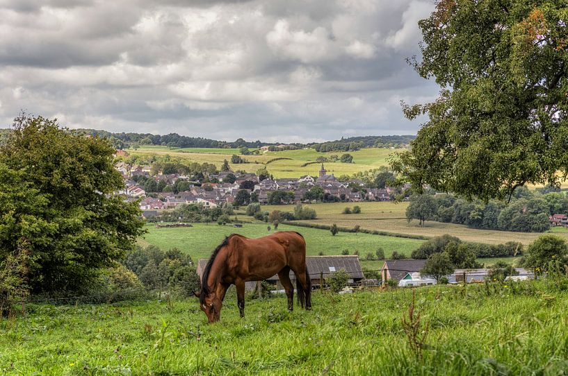 Paard in de wei bij Epen in Zuid-Limburg van John Kreukniet