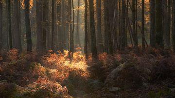 Dromerige herfstochtend in het Speulderbos