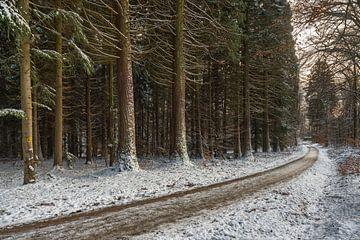 Wintergevoel op het Redwood pad van Uwe Ulrich Grün