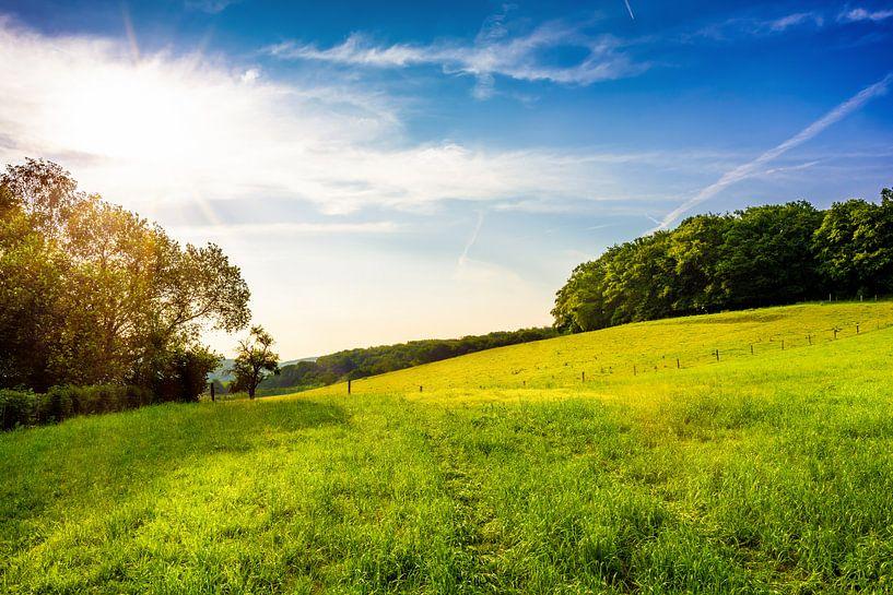 Green meadows van Günter Albers