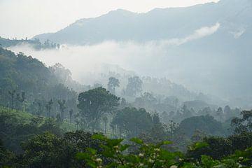 Ochtendglorie Mysterieuze bergen Munnar India van Nathalie Afriat