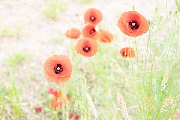 Rote Mohnblumen auf dem Feld an einem Sommertag von Wendy Boon