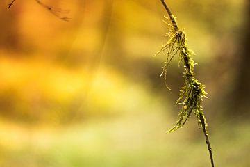 wapperend mos aan een tak van Marloes Hoekema