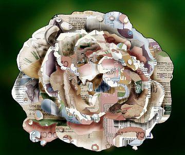 Witte roos van Ruud van Koningsbrugge
