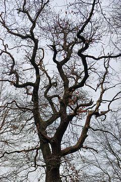 Tree top silhouetthe of a very old oak tree van wunderbare Erde