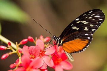Vlinder von Dennis Graafland