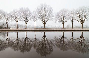Bomenrij langs het kanaal