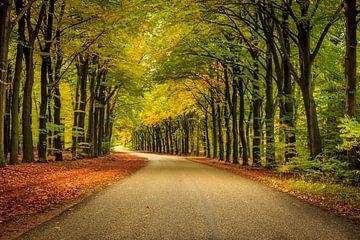 Veluwe op zijn herfst van Patrick Rodink