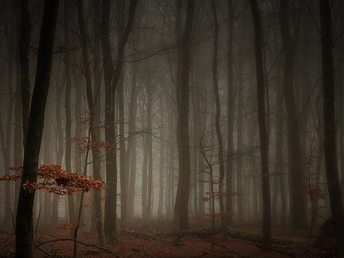 In a misty forrest (4:3) van