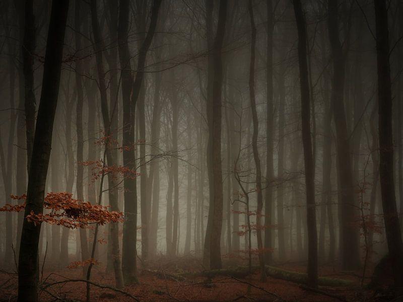 In a misty forrest (4:3) van Lex Schulte