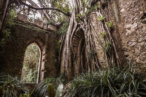 Overwoekerde ruïne in Portugal van Nic Limper