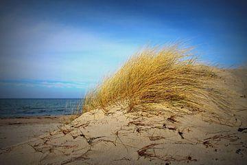 Herbst an der Ostsee von