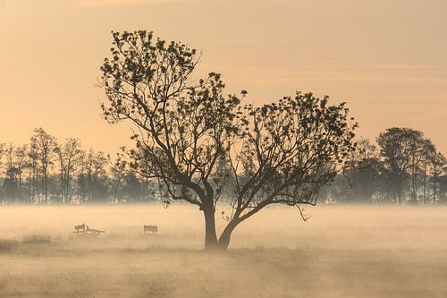 Boom in de mist von Stephan Neven