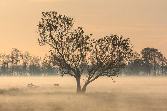 Boom in de mist van Stephan Neven