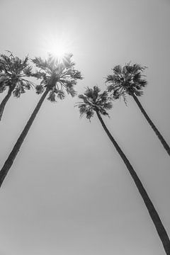 Palmen in der Sonne | Monochrom von Melanie Viola