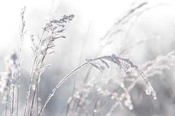 Winter Pastell  von Tanja Riedel