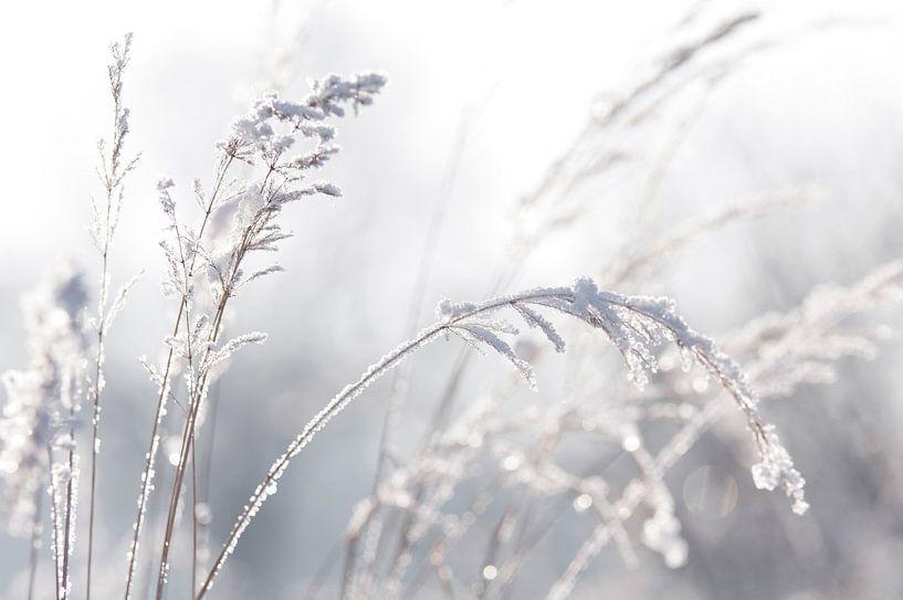 Winter Pastel van Tanja Riedel