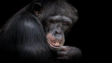 Chimpansee van Irma Heisterkamp