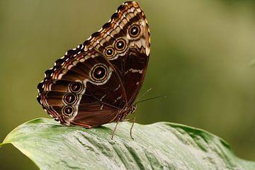 Schmetterling auf Blatt von Excellent Photo