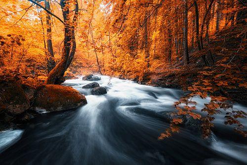 Ein Fluss im Herbst Wald van