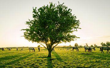 Ongestoord grazen, Oostvaardersplassen van Sven Wildschut