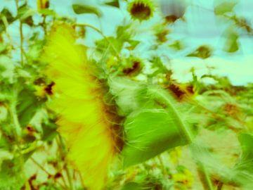 Sonnenblumen im Wind 6 von Andreas Gerhardt