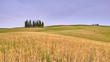 De wereldberoemde cipressen van Toscane van Jenco van Zalk