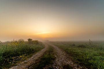 Sonnenaufgang in den Onlanden von Joris Brouwer