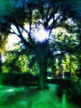 Zonlicht door boom van Elo Mars