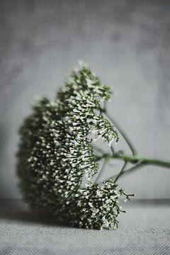 Bloem van Melanie Schat