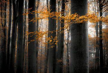 Zwarte beuken symfonie van Joris Pannemans - Loris Photography