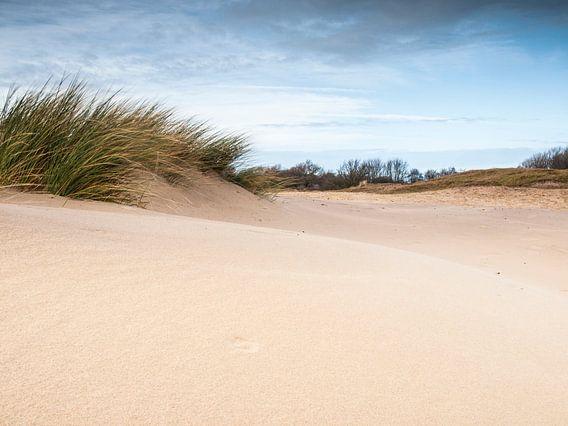 Sand and Wind van David Hanlon