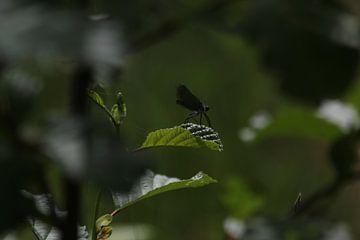 De vlieger op het blad