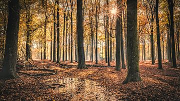 Forêt de Speulder[Or] sur rosstek ®