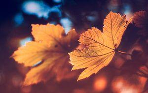 De gouden herfst - een esdoornblad in het brandpunt van het bokeh effect van Jakob Baranowski - Off World Jack